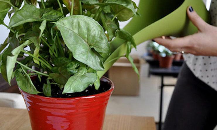 Cura delle piante in estate