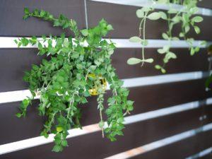 curare le piante in estate