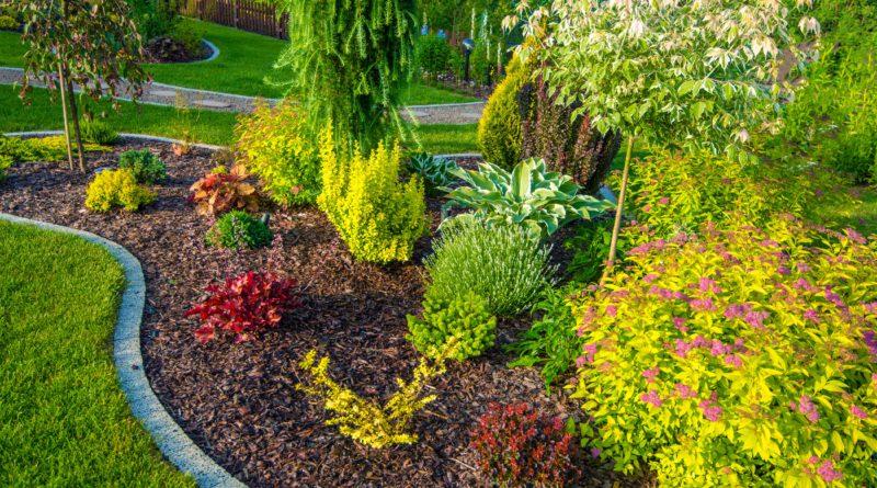 Cura delle piante in autunno